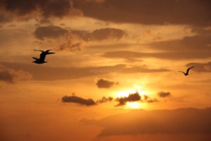 Fly Half Way Around The World
